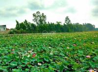 71 lô hòa lạc lotus view hồ sinh thái 3ha trung tâm khu công nghệ cao hòa lạc lh 0962415505