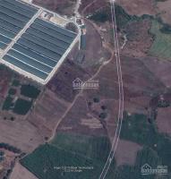 bán gấp 22ha và 43ha có thổ cư vườn bưởi và ổi đang cho thu hoạch xuân đông cẩm mỹ đồng nai