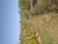 cần bán trang trại đất tại xã hàm chính hàm thuận bắc bình thuận