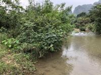 bán gấp 836m2 đất nghỉ dưng bám suối chảy quanh năm tại lâm sơn lương sơn hòa bình