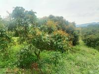 cần bán 2 ha đất ở cộng đất vườn trồng cam ở cao phong giá 25 tỷ 0986997230