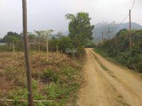 chính chủ bán đất thổ cư xã yên bài ba vì làm nhà vườn 12 trm2