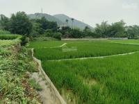 siêu hấp dẫn lô đất 5000m2 vị trí đắc địa giá hấp dẫn tại hòa sơn lương sơn hòa bình