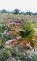 cần bán nhanh trang trại vườn cây ăn trái xã diên đồng giáp sông cái với giá rẻ lh 0982497979 vy