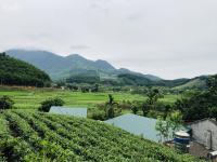 bán trang trại nhà vườn tại yên bình thạch thất hn diện tích 5500m2 giá 3 tỷ