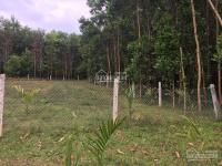 bán 1024m2 đất vườn đông lâm hòa phú hòa vang đà nng có 400m2 đất ở 0973343779