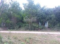 bán 1247m2 đất vườn hòa phú hòa vang đà nng có 300m2 đất ở sát quốc lộ 14g đẹp 0973343779