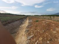 kẹt tiền bán nhanh trang trại bưởi gần 1 năm tuổi tại diên đồng giá 810tr 0869 717979 mr hùng