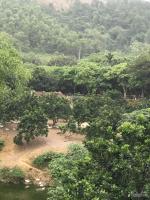 cần bán lô đất 7260m2 có 400m2 đất ở toàn bộ đất trồng cây ăn quả cách đường ql6 500m