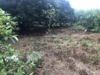 bán gấp 6800m2 mặt tiền dài 150m phù hợp phân lô hoặc nhà vườn kết hợp trang trại gần skylake