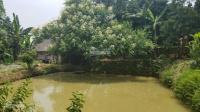 bán nhà vườn nghỉ dưng có vườn cây ao cá giá hơn tỷ