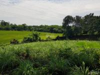 nhượng 3194m2 đất trang trại nhà vườn view cánh đồng 3 mặt tiền tại hòa sơn lương sơn hòa bình
