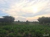 cần bán lô đất nông nghiệp tại buôn ma nhuê b xã đất bằng huyện krông pa