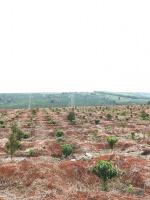 bán 8ha đất đẹp làm trang trại huyện ia grai gia lai lh 0984870426