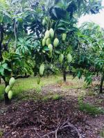 chính chủ cần bán miếng đất vườn đẹp có cây ăn trái có thổ cư tại phú lộc tân phú đồng nai