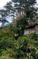 bán giùm anh chị cạnh nhà lô đất 6000m2 thuộc ngoại ô đà lạt 850 tr vườn cafe hồng bơ và nhà g