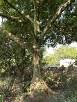 cần bán lô đất 4110m2 có nhiều cây bóng mát to giao thông thuận tiện