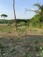 bán đất đang trồng tiêu ấp sóc 5 xã minh tâm huyện hớn quản tỉnh bình phước