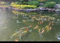 cần bán gấp 6000m2 biệt thự nhà vườn tuyệt đẹp tại lương sơn