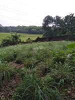 nhượng 31939m2 có 400m thổ cư view cánh đồng hòa sơn lương sơn hòa bình giá 2 tỷ 850 triệu
