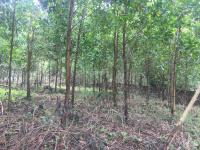 đất làm nhà vườn nghỉ dưng giá đầu tư có tổng diện tích 3100m2 tại hòa sơn lương sơn hòa bình