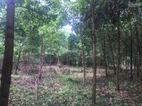 cần bán lô đất 3100m2 vị trí vô cùng đắc địa views cánh đồng tại hòa sơn lương sơn hòa bình