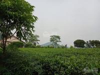 chỉ 1 x tỷ quý khách sẽ được sở hữu ngay lô đất vàng trong làng nghỉ dưng tại ba vì hà nội