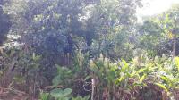 nhượng 2200m2 khuôn viên nhà vườn sn nhà chỉ việc đến ở tân vinh lương sơn hòa bình giá 13 tỷ