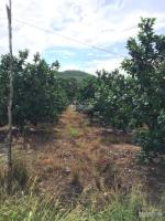 trang trại gần 8hecta đã thu hoạch diên khánh
