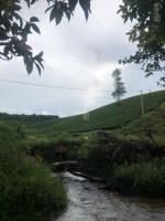 đất nghỉ dưng view hồ thích hợp làm trang trại farmstay tại bảo lộc lâm đồng