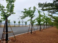 đất nền giá đầu tư đảo ngọc tuần châu hạ long quảng ninh lh 0911519529
