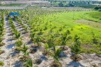 chính chủ cần bán lô đất 8022m2 đất trang trại gần biển bắc bình giá 522 triệu đất đẹp vuông vức