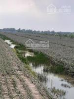 chính chủ cần bán gấp 53 hecta đất khóm đang thu hoạch đường tỉnh lộ 867 vào 200m giá 15 tỷ tl