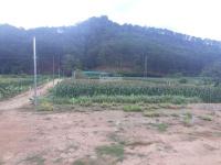 cho thuê đất 30m mặt tiền đường mimosa đà lạt