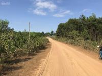 bà nà gần 5 ha đất trồng cây lâu năm một lô duy nhất 0972355247