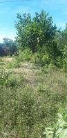 view suối 5000m2 đất xây nhà vườn có 400m2 đất ở tren bà nà 0972355247