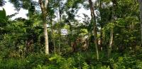 bán 1341m2 đất ở giữa trung tâm xã nhuận trạch lương sơn giá 12 tỷtổng diện tích 900000đm2
