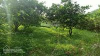 cần bán 4000m2 đất đông xuân làm nhà vườn nghỉ dưng