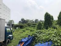 cho thuê đất làm nhà xưởng vườn cây kiểng