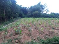 chuyển nhượng gấp 1600m2 đất thổ cư nhà vườn ở nhuận trạch lương sơn hb phẳng lỳ vuông góc