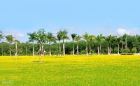 Cần mua đất nền sổ đỏ Phú Thịnh - Đông Sài Gòn ở Nhơn Trạch