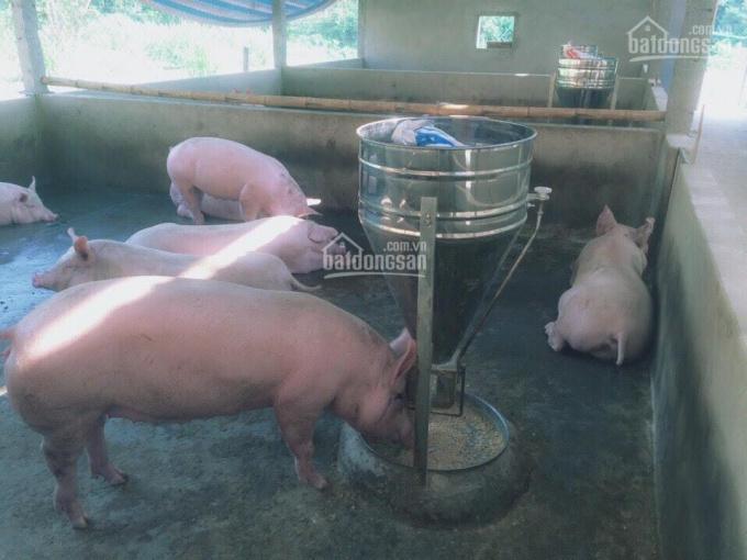 Bán trang trại 9ha tại xã Tiến Bộ, Yên Sơn, Tuyên Quang