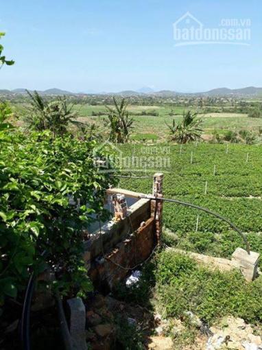 Mô hình trang trại hiện đại 3.8 ha chỉ 1.6 tỷ (thương lượng), LH 0932936508