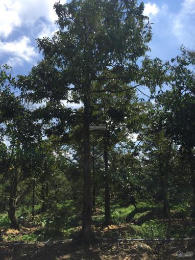 Cần bán miếng vườn 3633m2 tại Ấp Bình Đức, Xã Tam Bình, Huyện Cai Lậy, Tỉnh Tiền Giang