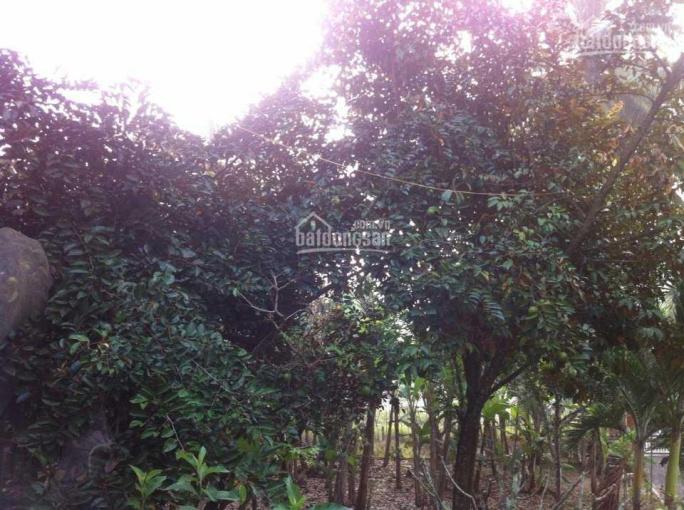 Sổ hồng riêng, nhà vườn cô Năm 1200.06m2, ngang 30.02m mặt tiền Nguyễn Văn Bứa, 0979983098