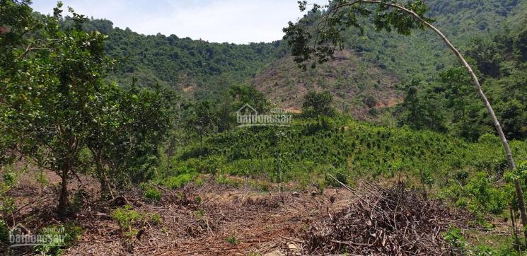 Bán đất rừng thích hợp làm trang trại tại cầu Hội Yên Hòa Bắc 0916686923