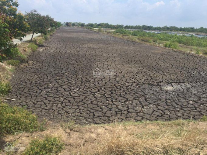 Hot đất Lý Nhơn, Cần Giờ, cần kết hợp ACE hoa hồng hấp dẫn