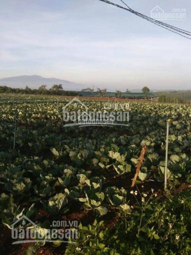 Cần sang nhượng trang trại 8,6ha tại Lâm Hà, Lâm Đồng 8.6ha - 20 tỷ