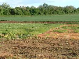 Bán đất trồng cây đất lúa chỉ từ 550k-3,2tr/m2 xã Phước Hiệp