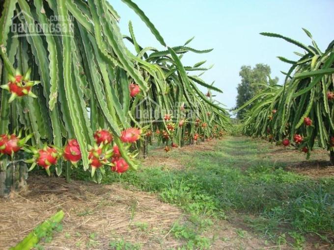 chính chủ bán 1150m2 đất trồng cây lâu năm có sổ đỏgiá 85 triệu liên hệ 0944-699-789